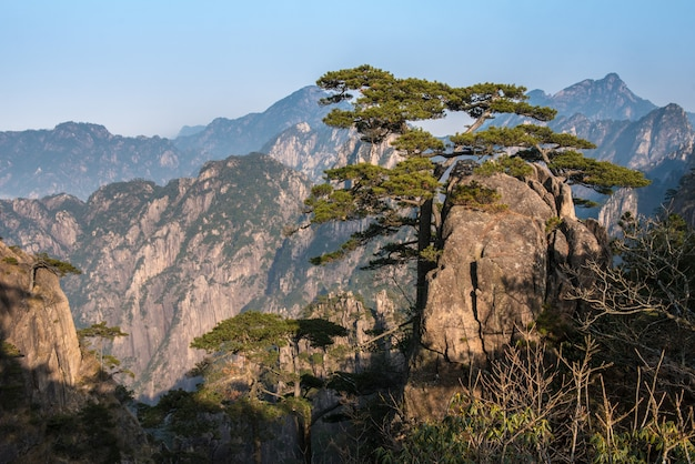 Beautiful landscpae of huangshan (yellow mountain) with sea clouds in eastern china's anhui province.