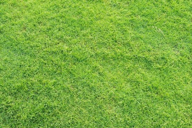 Beautiful lawn background