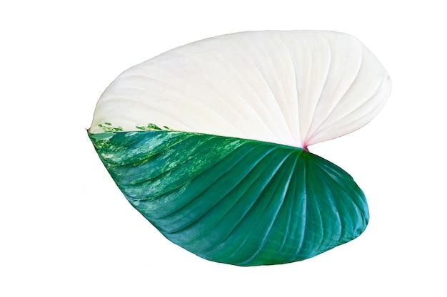 Beautiful leaf isolated on white