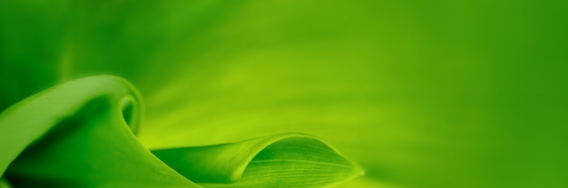 Beautiful leaf texture banner background in nature