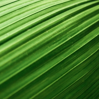 Beautiful leaf texture macro photography