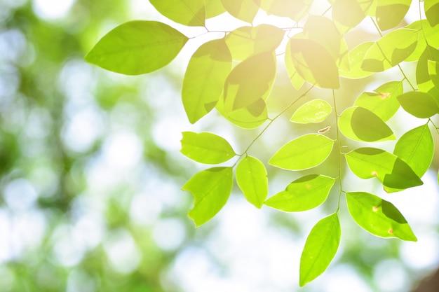Красивые листья и боке в природе на утро.