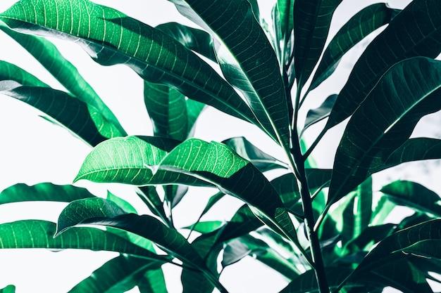 美しい葉のテクスチャパターンの背景