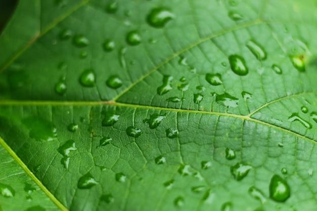 Красивые листья с каплями дождя крупным планом фона