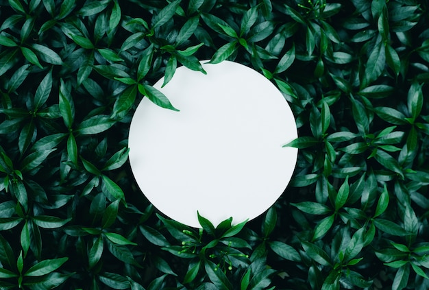 Beautiful leaves with round shit of paper