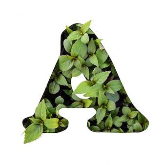 ホワイトペーパーステンシルで新鮮な緑の葉で作られた英語のアルファベットの美しい文字a
