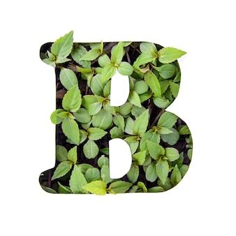 ホワイトペーパーステンシルで新鮮な緑の葉で作られた英語のアルファベットの美しい文字b