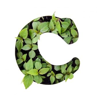 ホワイトペーパーステンシルで新鮮な緑の葉で作られた英語のアルファベットの美しい文字c