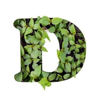 ホワイトペーパーステンシルで新鮮な緑の葉で作られた英語のアルファベットの美しい文字d