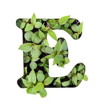 ホワイトペーパーステンシルで新鮮な緑の葉で作られた英語のアルファベットの美しい文字e