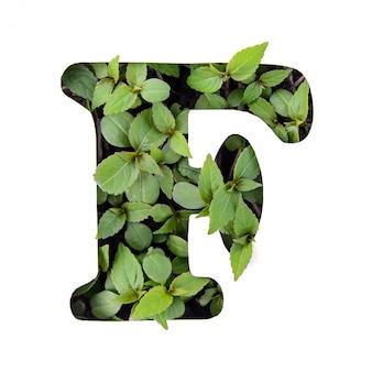 ホワイトペーパーステンシルで新鮮な緑の葉で作られた英語のアルファベットの美しい文字f