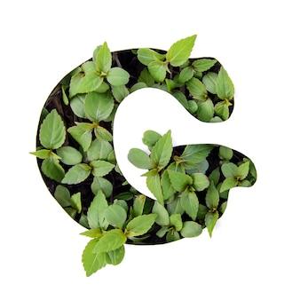 ホワイトペーパーステンシルで新鮮な緑の葉で作られた英語のアルファベットの美しい文字g