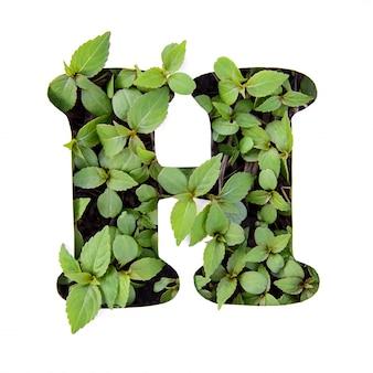 ホワイトペーパーステンシルで新鮮な緑の葉で作られた英語のアルファベットの美しい文字h