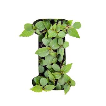 ホワイトペーパーステンシルで新鮮な緑の葉で作られた英語のアルファベットの美しい手紙i