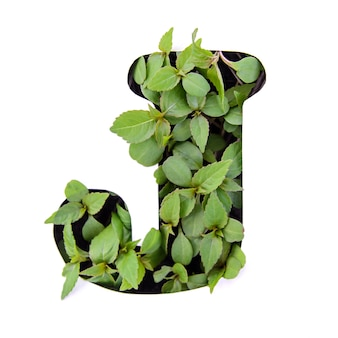 ホワイトペーパーステンシルで新鮮な緑の葉で作られた英語のアルファベットの美しい手紙j