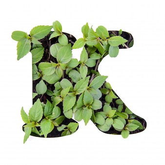 Beautiful letter k of english alphabet made of green fresh leaves in white paper stencil