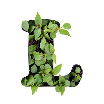Beautiful letter l of english alphabet made of green fresh leaves in white paper stencil