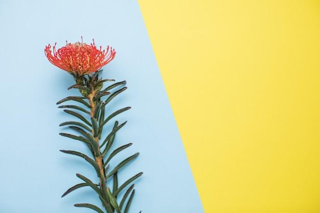 Красивый лейкоспермум на разноцветных бумажных фонах с копией пространства. весна, лето, цветы, цветовая концепция, женский день.