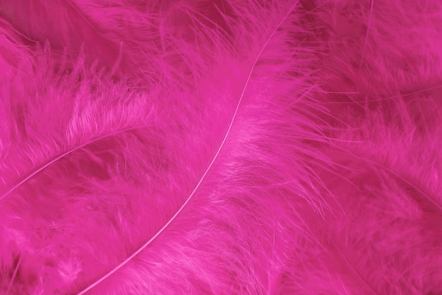 Beautiful light pink bird feathers pattern texture background.