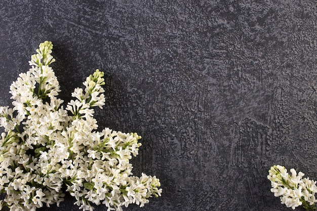 Beautiful lilac flower on gray concrete background.