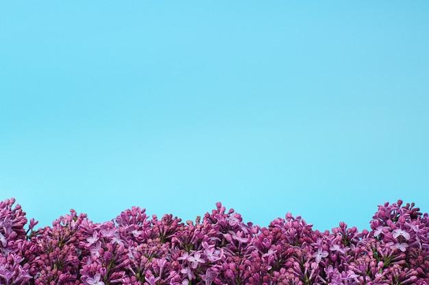分離された美しいライラックの花