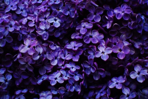 Красивые сиреневые цветы