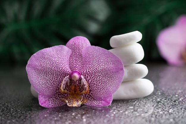 Красивый сиреневый цветок орхидеи и стопка белых камней с листьями монстеры на черном фоне