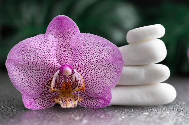 Красивый сиреневый цветок орхидеи и стопка белых камней с листьями монстеры