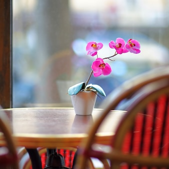 Beautiful lilac orchid in the white pot on the table in european cafe