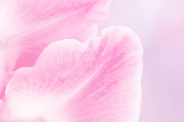 Beautiful lilly flowers made with color filters in soft color and blur style for background