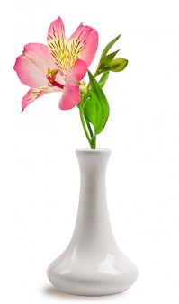 Beautiful lily flower in the vase