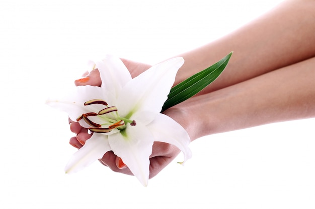 Beautiful lily flower in woman hands