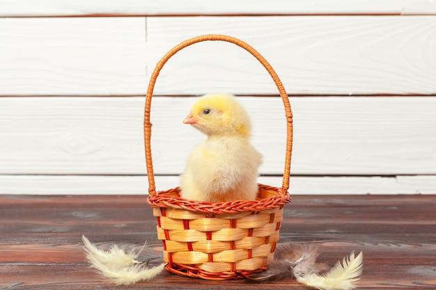 Beautiful little chicken in nest