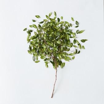 흰색 배경 위에 많은 잎이 있는 아름다운 작은 녹색 나무. 모든 포스터 또는 엽서에 좋은 장식.