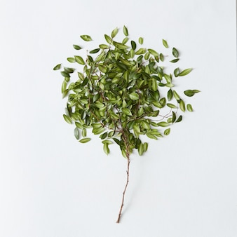 Beautiful little green tree with many leaves over white background. nice decoration for any poster or post card.
