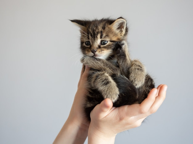 子供の手のクローズアップで美しい子猫