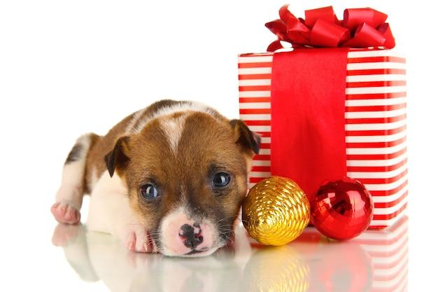 흰색으로 격리된 선물로 둘러싸인 아름다운 작은 강아지