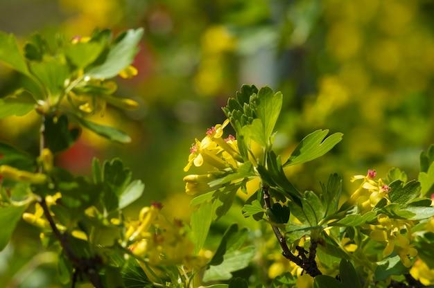 Beautiful little yellow flowers background