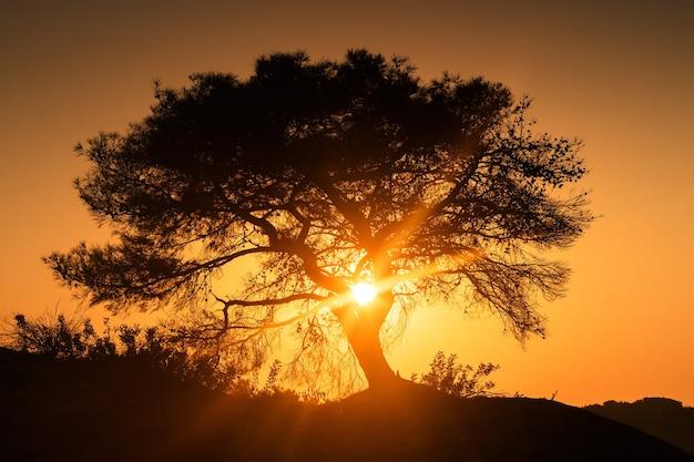 아름다운 외로운 나무가 둘러싸인 일출을 맞이합니다.