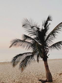 화려한 따뜻한 노란색 일몰 바다와 빈 해변에 아름다운 외로운 열대 야자수