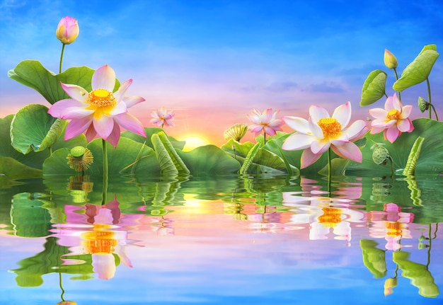 Beautiful lotus flower blooming reflection water as the sunrise.