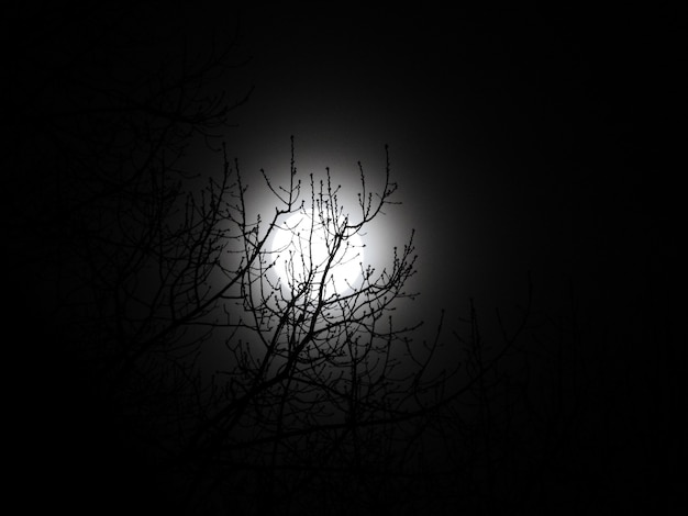 Beautiful low angle shot of a bare tree and the moon at night