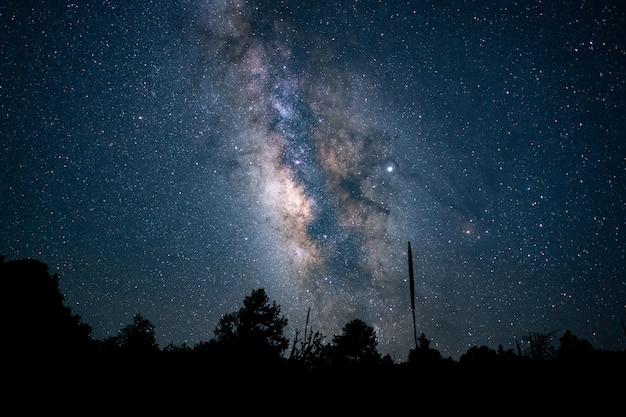 Bello colpo di angolo basso di una foresta sotto un cielo notturno stellato blu