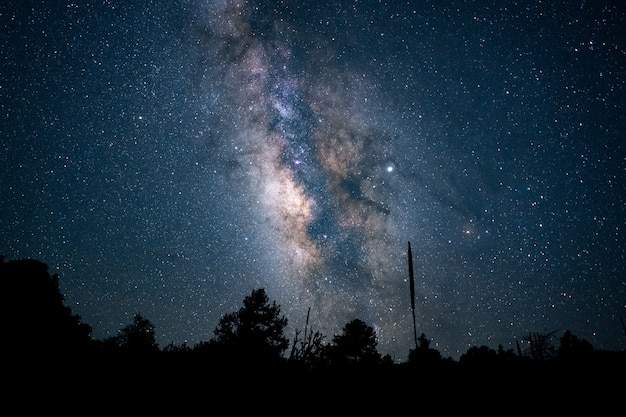 青い星空の夜空の下で森の美しいローアングルショット