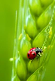 Beautiful lucky ladybug