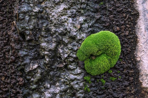 壁に美しい青々とした苔