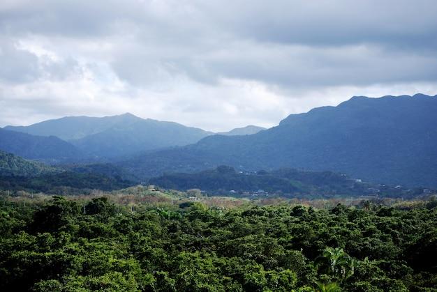 Красивый пышный тропический лес и горный хребет в пуэрто-рико.