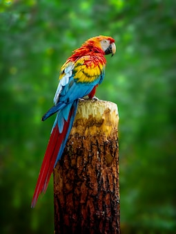 A beautiful macaw parrot is sitting on a branch