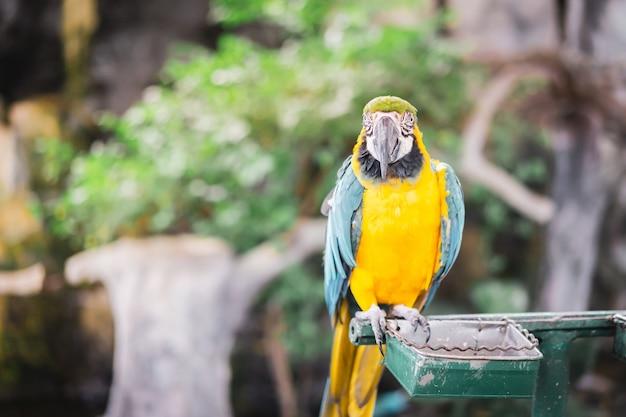 Beautiful macaw parrot portrait, bird in the garden.