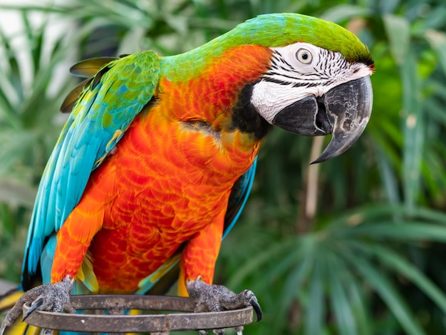 A beautiful macaw and parrot